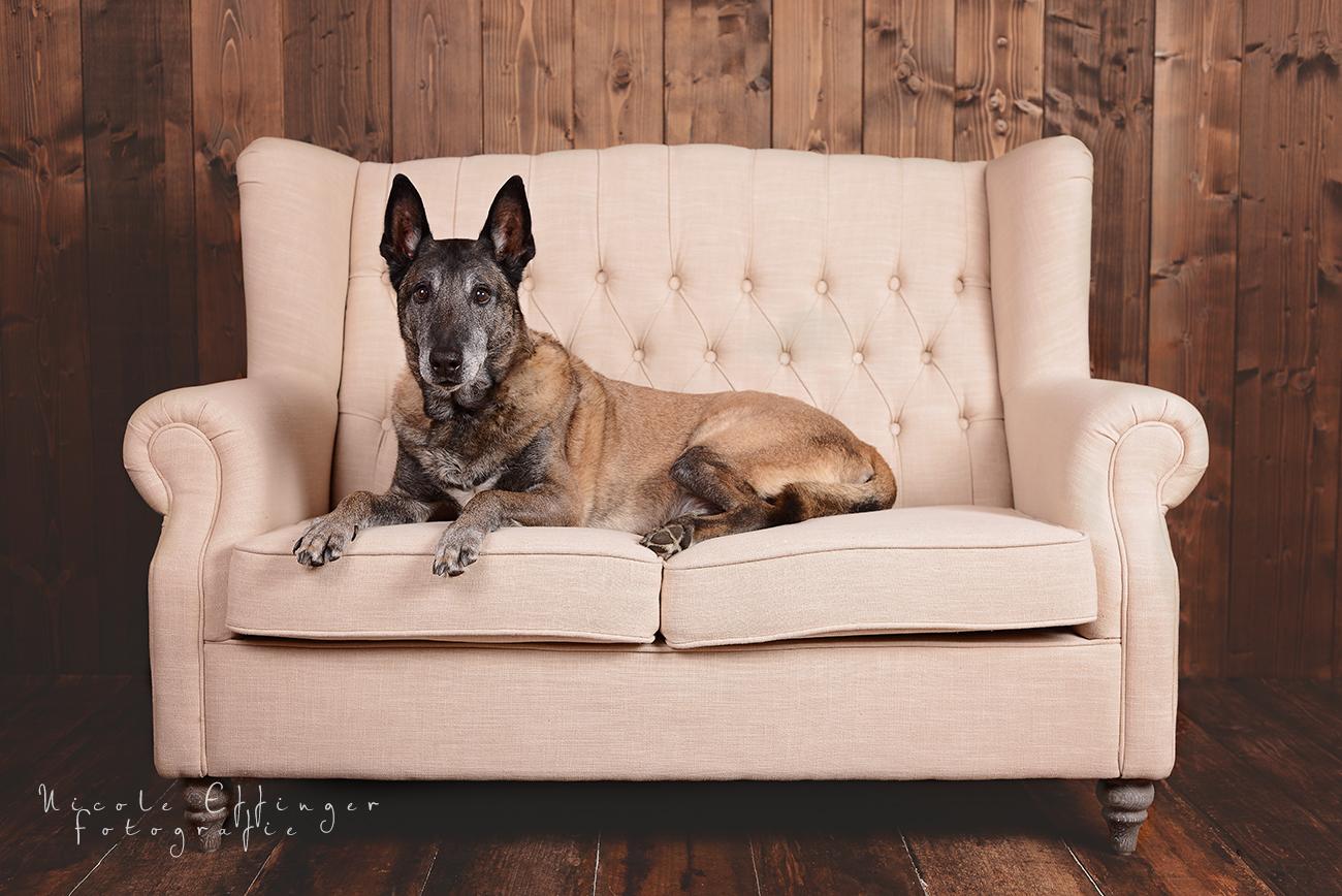 Studio Fotos Hund